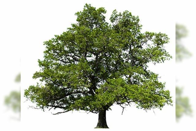 Neue Chancen für Wehrer Wald