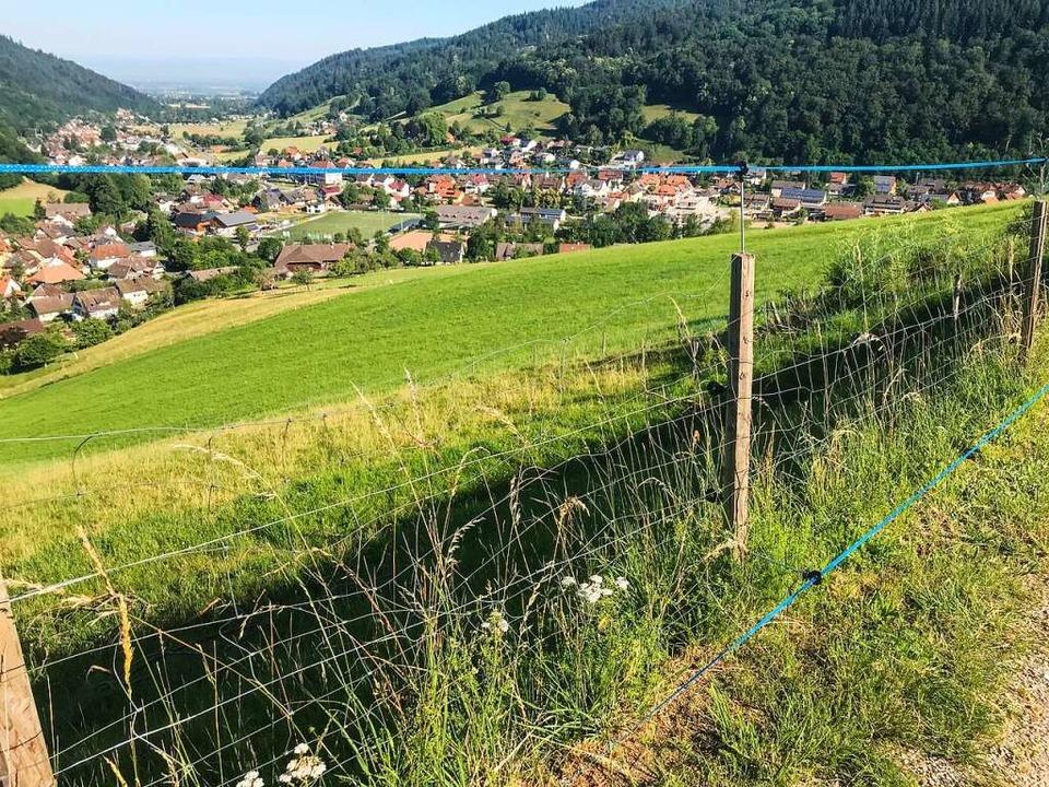 Nach den Richtlinien geschützter Zaun im Münstertal.  | Foto: Gabriele Hennicke