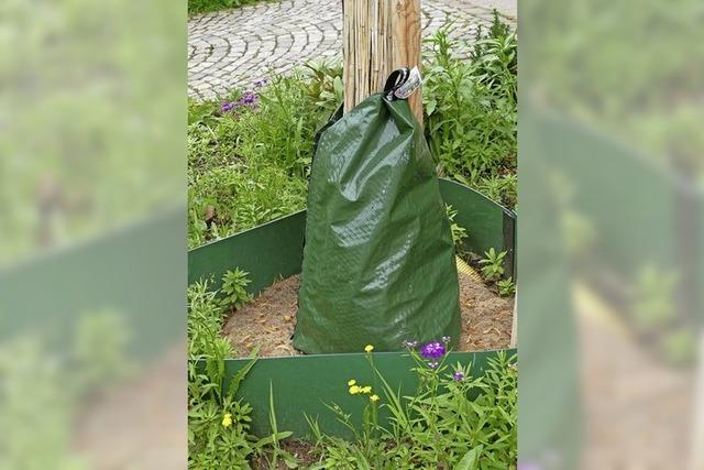 Mehr Grün in die Stadt Waldkirch