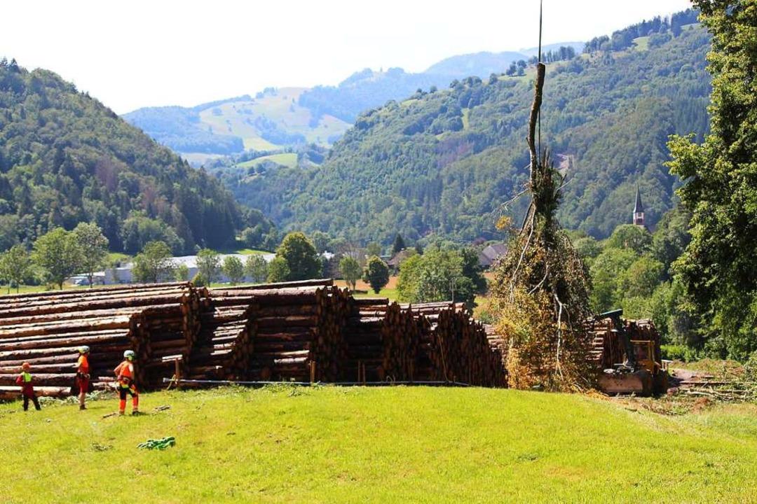 Am Nasslager in Geschwend werden die gefällten Bäume abgeworfen.  | Foto: Martin Klabund