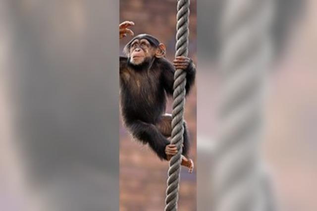 Patente auf Affen gekippt