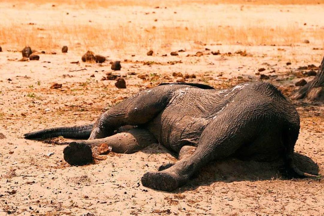 Behörden bestätigen Tod von mindestens 275 Elefanten. (Archivbild)    Foto: - (dpa)