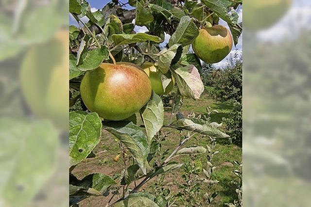 Gemeinde fördert das Pflanzen von Obstbäumen