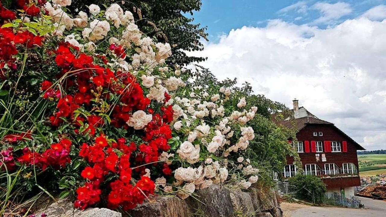 Tolle Blütenpracht im Winzerort Maisprach  | Foto: Gerald Nill