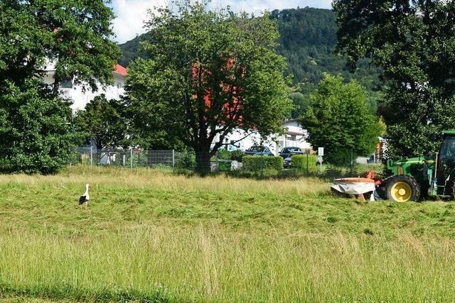 Fußballplatz wird zur Futterwiese