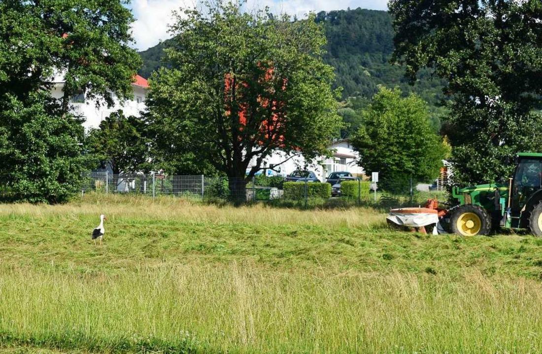 Für die Tiere des Landwirts und auch d...er Platz bis auf weiteres Futterwiese.  | Foto: Walter Holtfoth