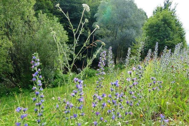 Entlang der Schopfheimer Wiese wird pflanzenfreundlich gemäht