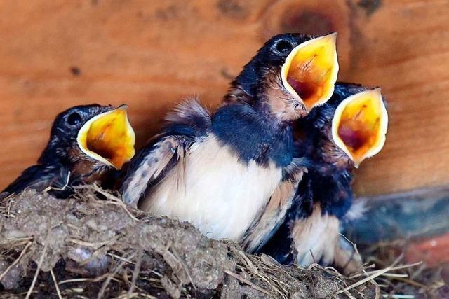 Warum fliegen Vögel bei gutem Wetter hoch?