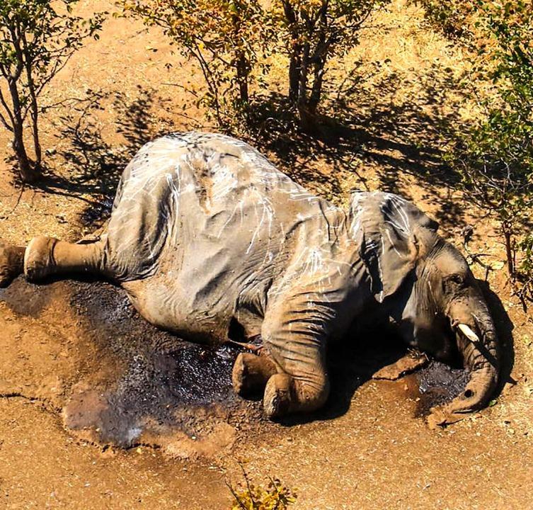Die Kadaver von zahlreichen, auch jungen Elefanten wurden gefunden.  | Foto: Uncredited (dpa)