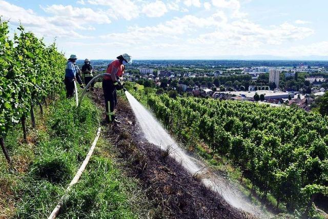 Flächenbrände auf dem Schutterlindenberg und in Wallburg