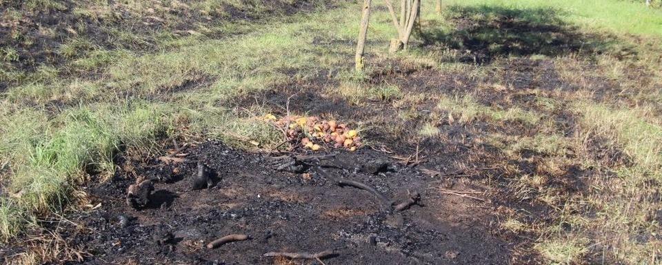 Zwischen Bötzingen und Wasenweiler hat ein Weizenfeld gebrannt