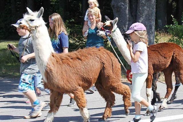 Das Ferienprogramm in Efringen-Kirchen startet mit Alpakas