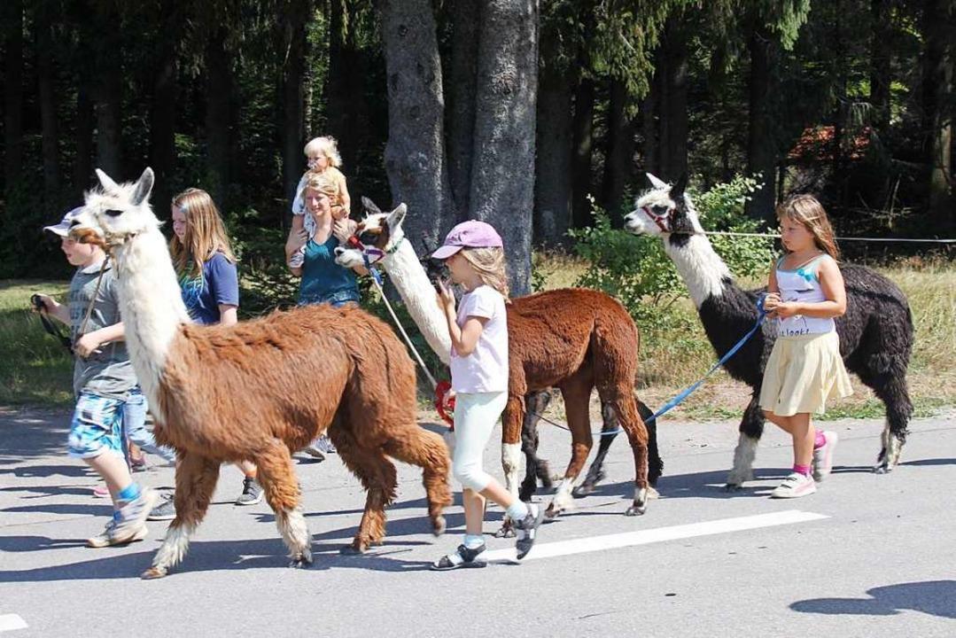 Im Hotzenwald werden einige Alpaka-Her...zu  Alpakas in Herrischried angeboten.  | Foto: Nina Witwicki