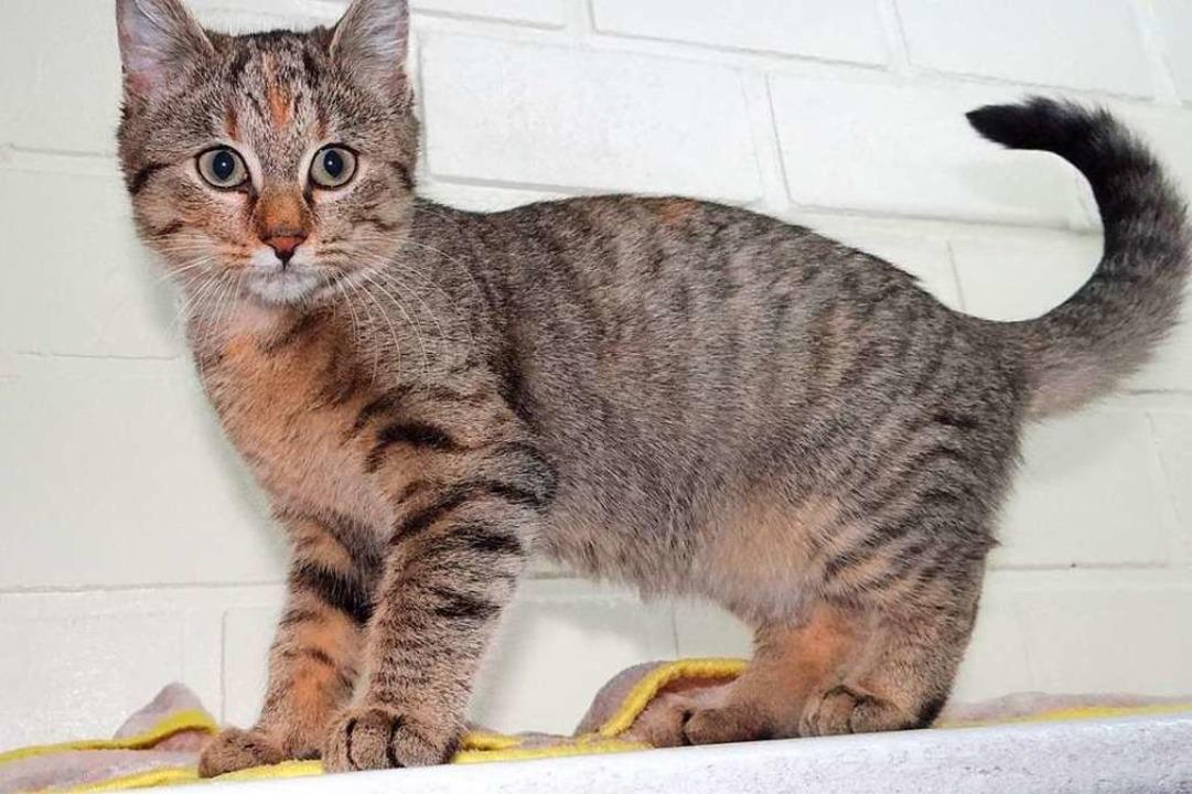 Wer schießt auf Katzen? (Symbolbild)    Foto: Tierheim Lahr