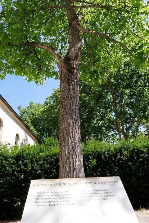 Bleibt erhalten: Der Baum der Freundschaft  | Foto: Hans-Peter Müller