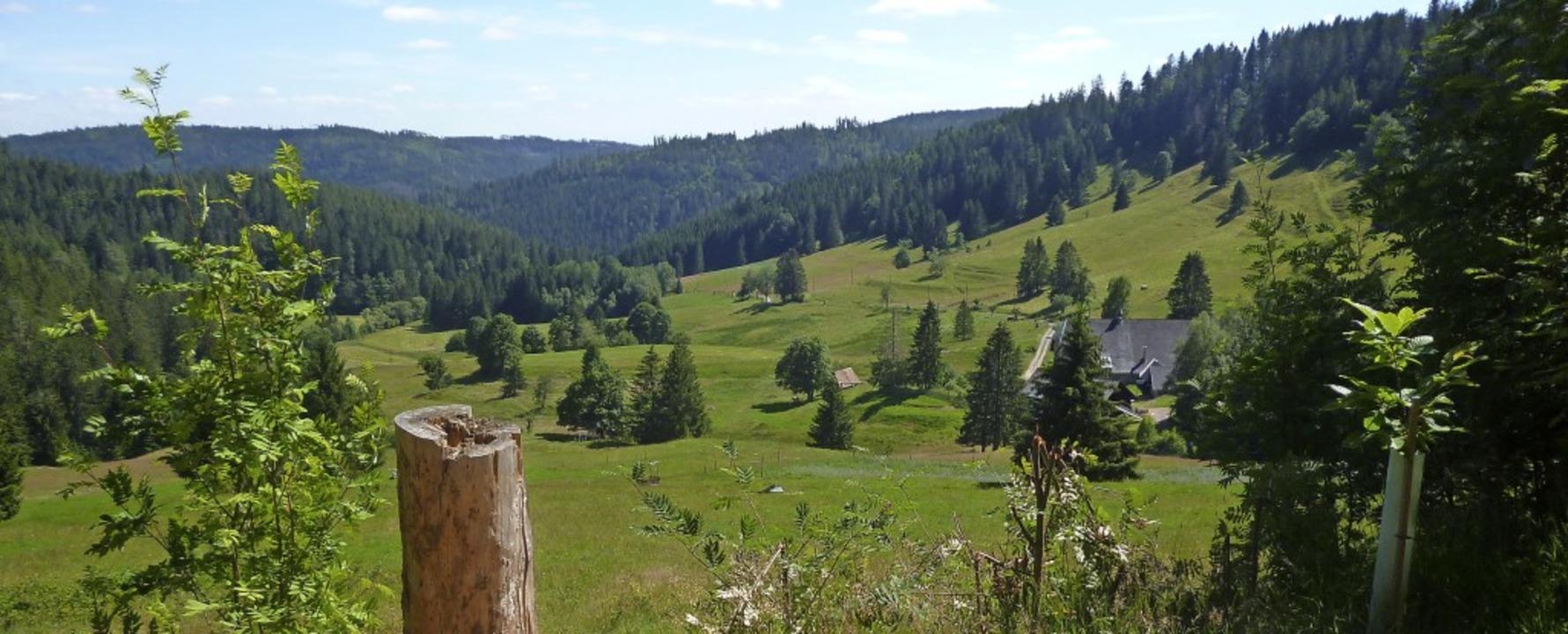 Blick auf das idyllische Tal mit dem Windberghof.    Foto: Claudia Renk