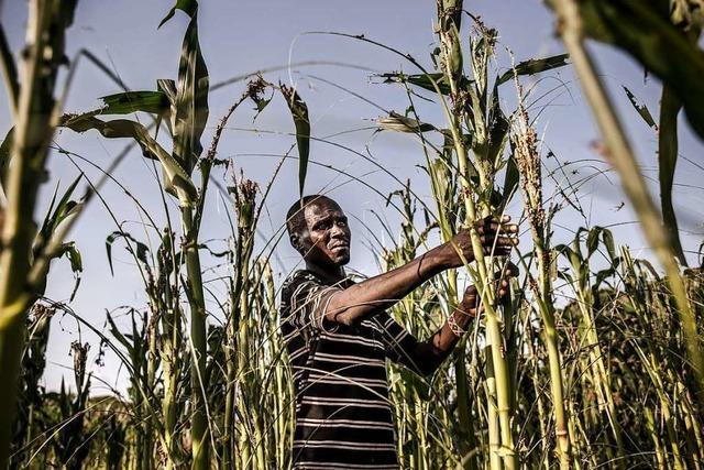 Einer Milliarde Menschen droht der Hunger