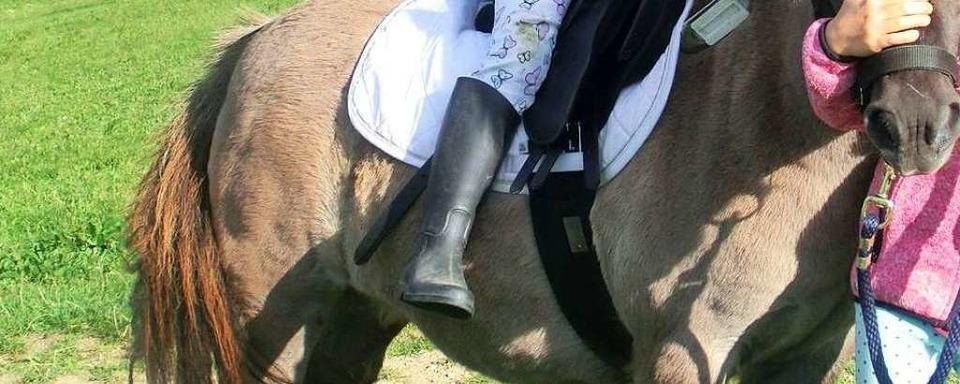 Ponys gehen durch: zwei Kinder verletzt