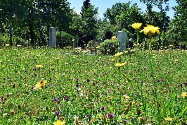 Besucher des Hauptfriedhofs in Freiburg ärgern sich über verwilderte Wiesen