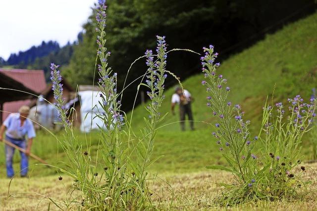 Landschafts- und Naturschutz