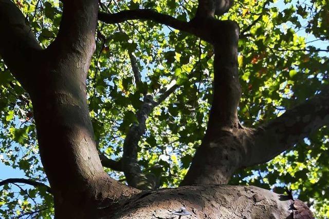 Den Baum vor lauter Stadt nicht sehen