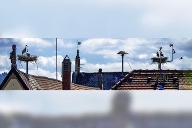 Über den Dächern Ettenheims