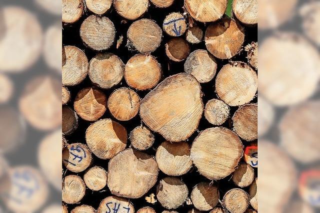 Laufenburg will seinen Forst künftig zum Mischwald machen