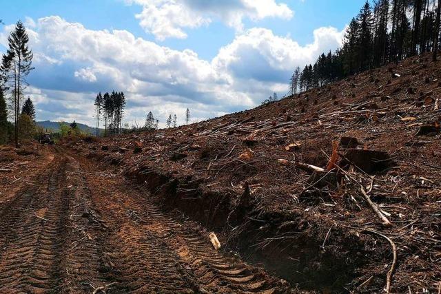 In Europa wird jährlich immer mehr Holz geschlagen