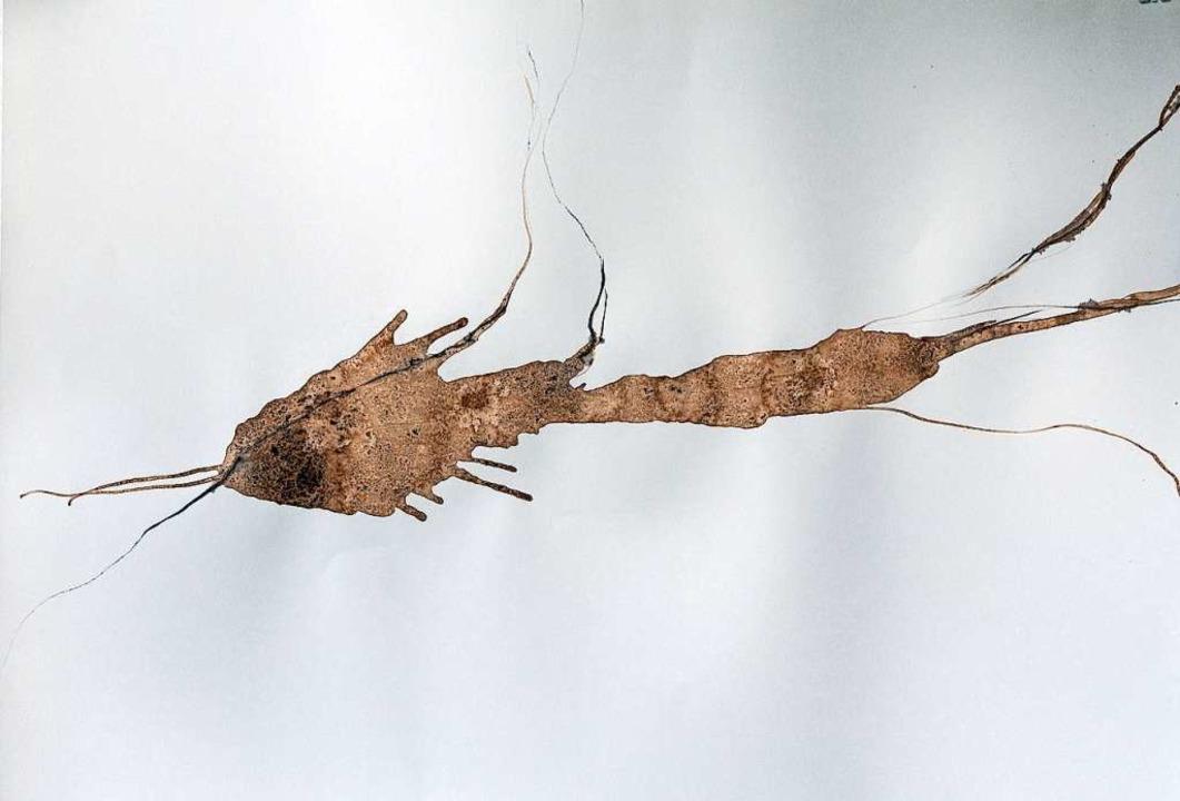 An ein versteinertes Lebewesen aus dem...schtechnik Graphit / Tusche / Papier).    Foto: Helmut Rothermel