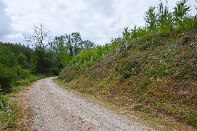 Hertener Ehepaar beklagt Umweltfrevel am Rotthauweg