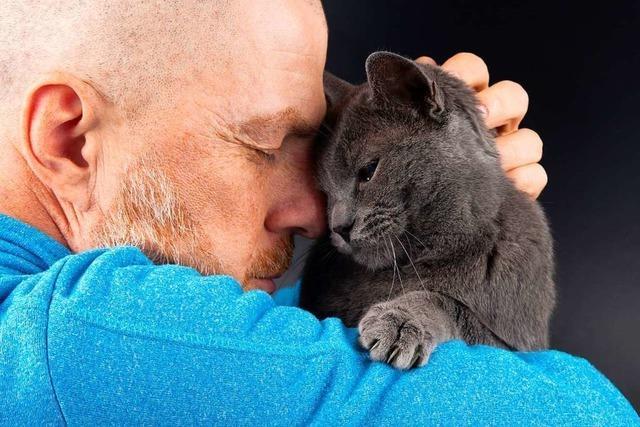 Forscher haben die Beziehung zwischen Mensch und Katze untersucht