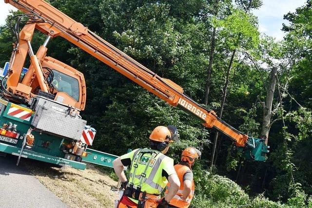 150 kranke Bäume wurden bei Freiburg gefällt – auch im Naturschutzgebiet