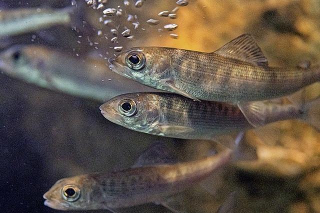 Aquarien für stark gefährdete Fischarten