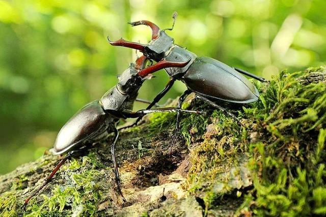 Vater und Sohn drehen Kurzfilm über seltene Arten im Gundelfinger Wald