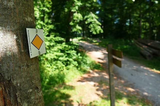 Muss im Müllheimer Wald vor waldtypischen Gefahren gewarnt werden?