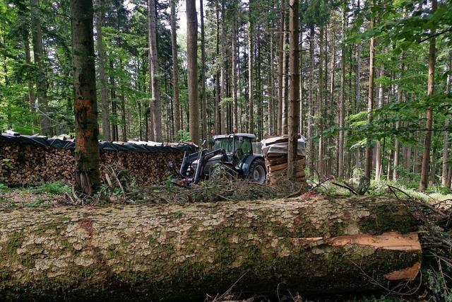 Mehr Geld für den Schutz des Waldes