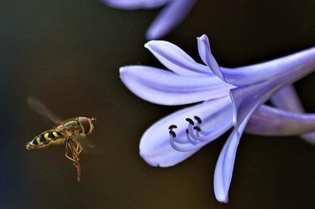 Graziöse Flieger