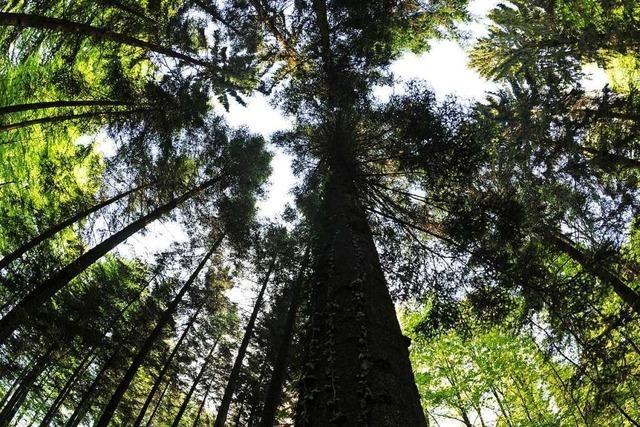 Der Wald soll der Gemeinde Schliengen Ökopunkte liefern