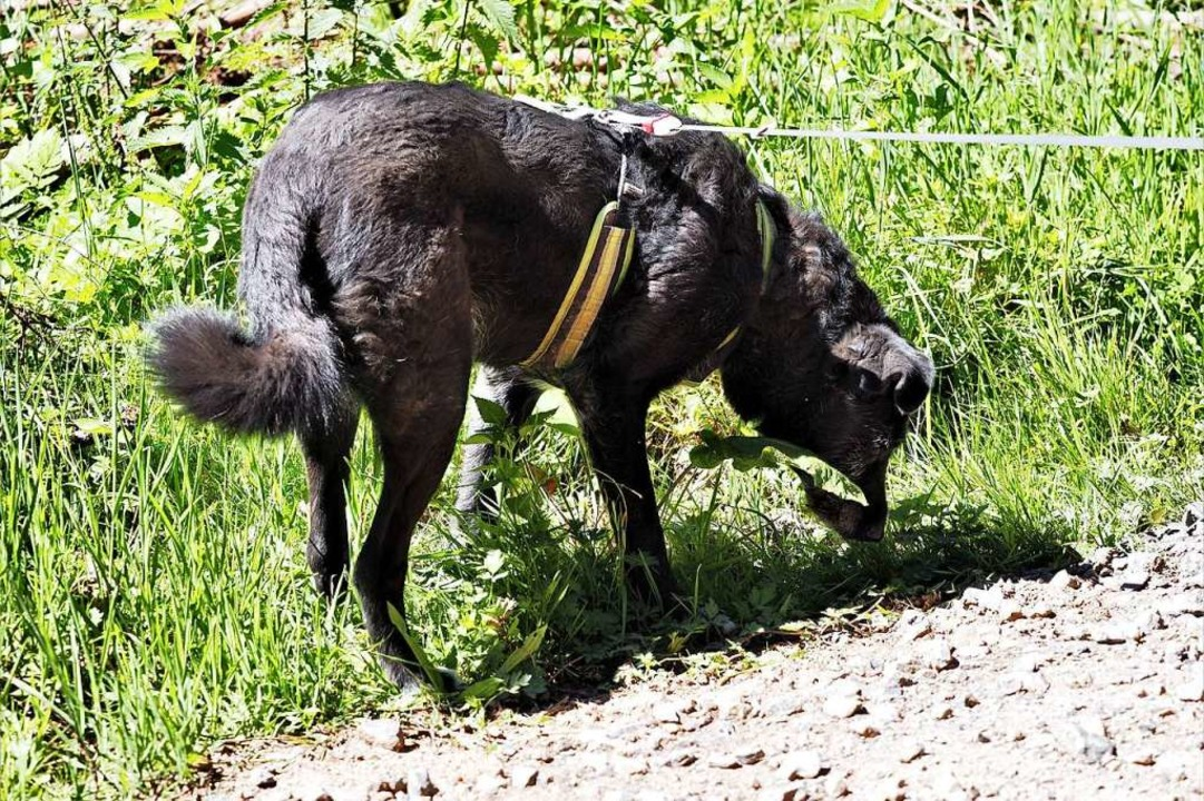 """""""Wölfe markieren gezielt auf Weg...ie Hunde"""", erklärt Felix Böcker.    Foto: Susanne Gilg"""