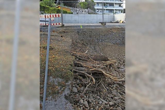 Wurzeln bei Bauarbeiten beschädigt
