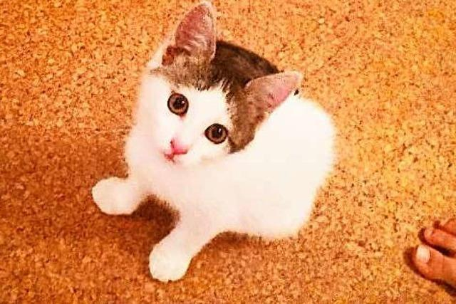 Mein größter Wunsch war eine neue Katze