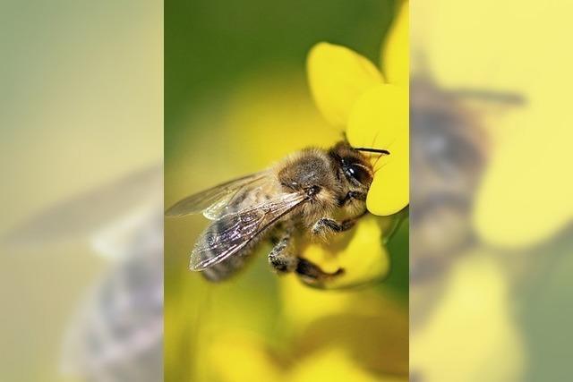 Wie dem Insektensterben begegnet werden soll