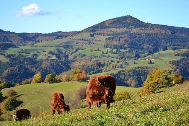 Die Stadt Zell sucht das schönste Foto aus dem Bergland