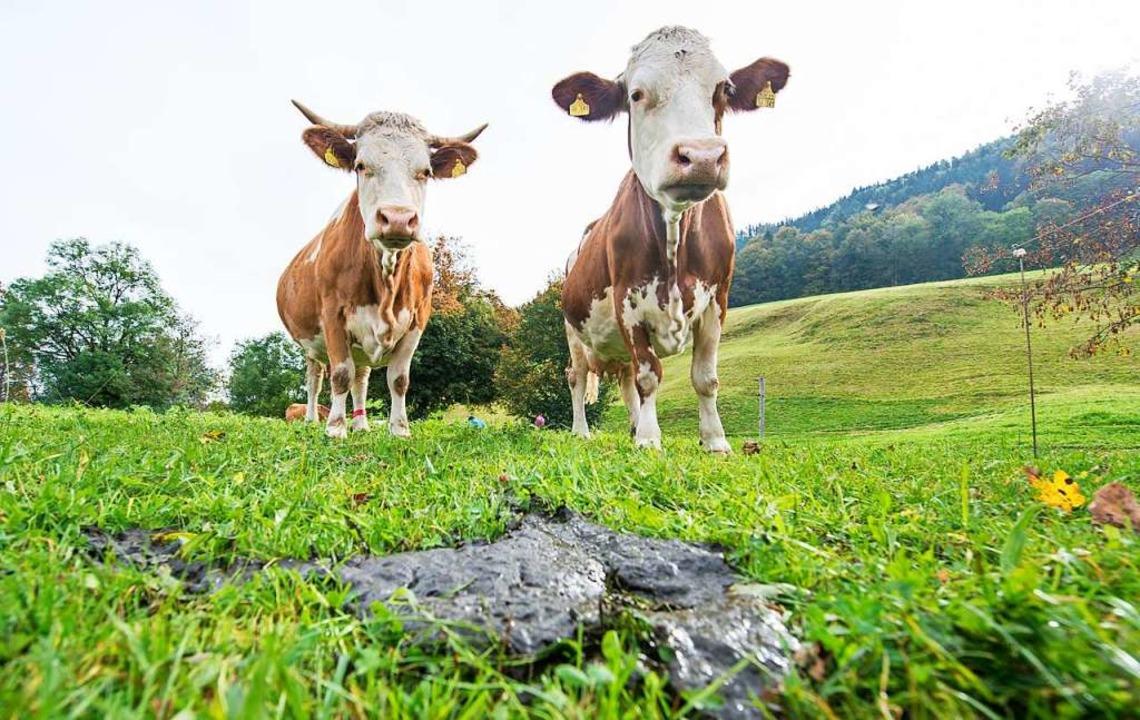 Kühe können auch Toilette – man muss nur üben mit ihnen.  | Foto: Marc Müller