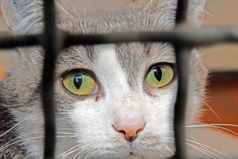 Eine ausgesetzte Katze ist im Tierheim gelandet.   | Foto: A3828 Christian Hager
