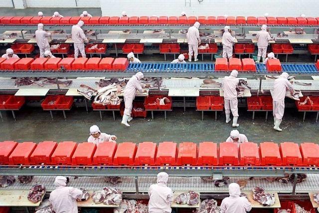 Werkverträge sollen in der Fleischindustrie bald ausgedient haben