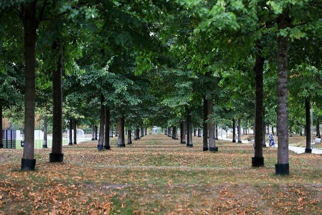 Warum in Lahr mehr als 200 Bäume weichen sollen
