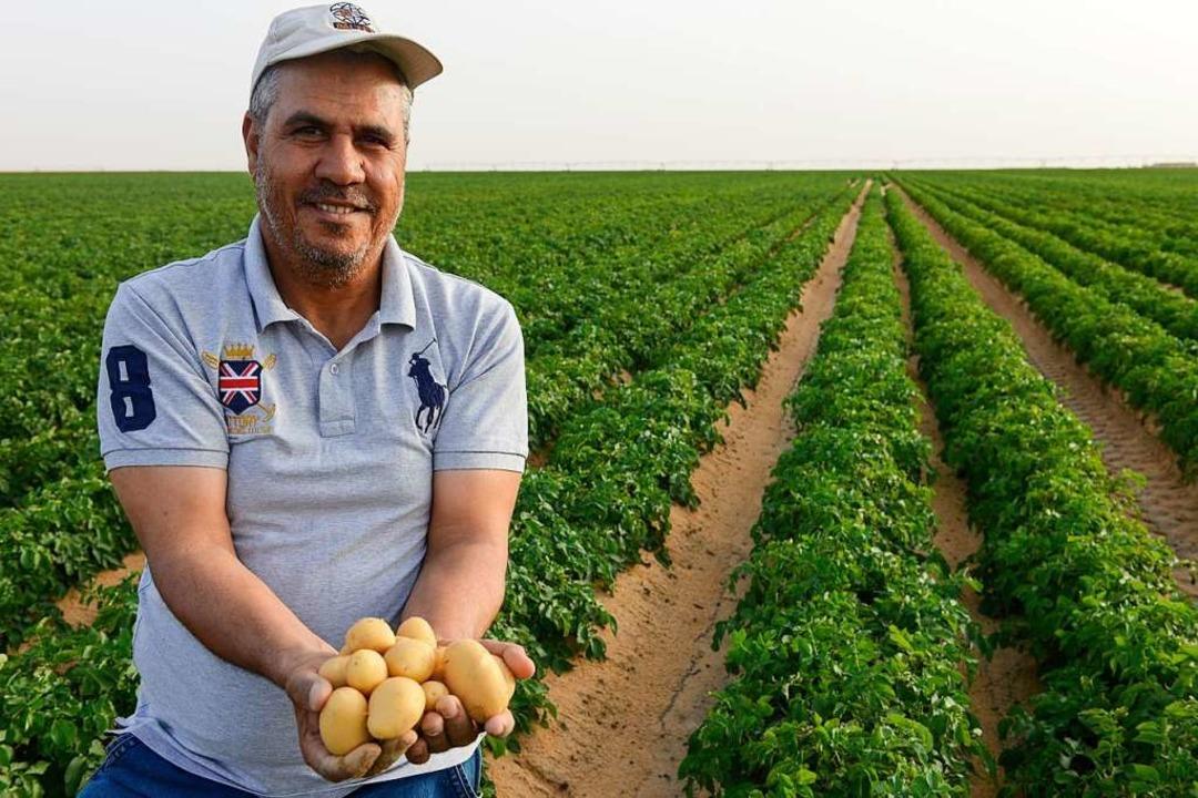 Zwei bis drei Ernten im Jahr sind laut Farmmanager Mohamed Gad möglich.    Foto: Joerg Boethling