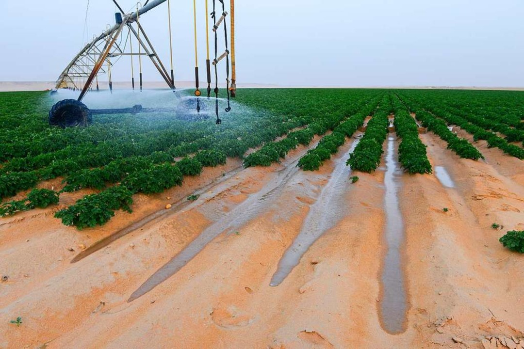 Bewässerung in der Wüste: Kartoffeln sind sehr durstig.    Foto: Joerg Boethling