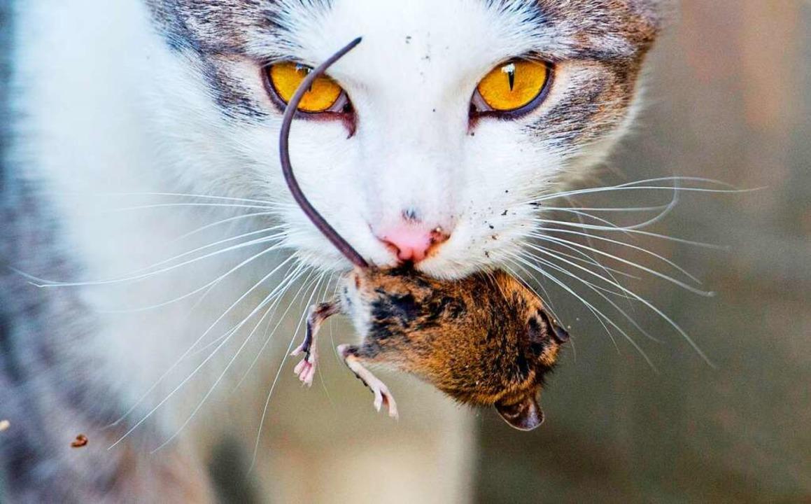 Katzen sind immer für eine Überraschung gut.  | Foto: Julian Stratenschulte